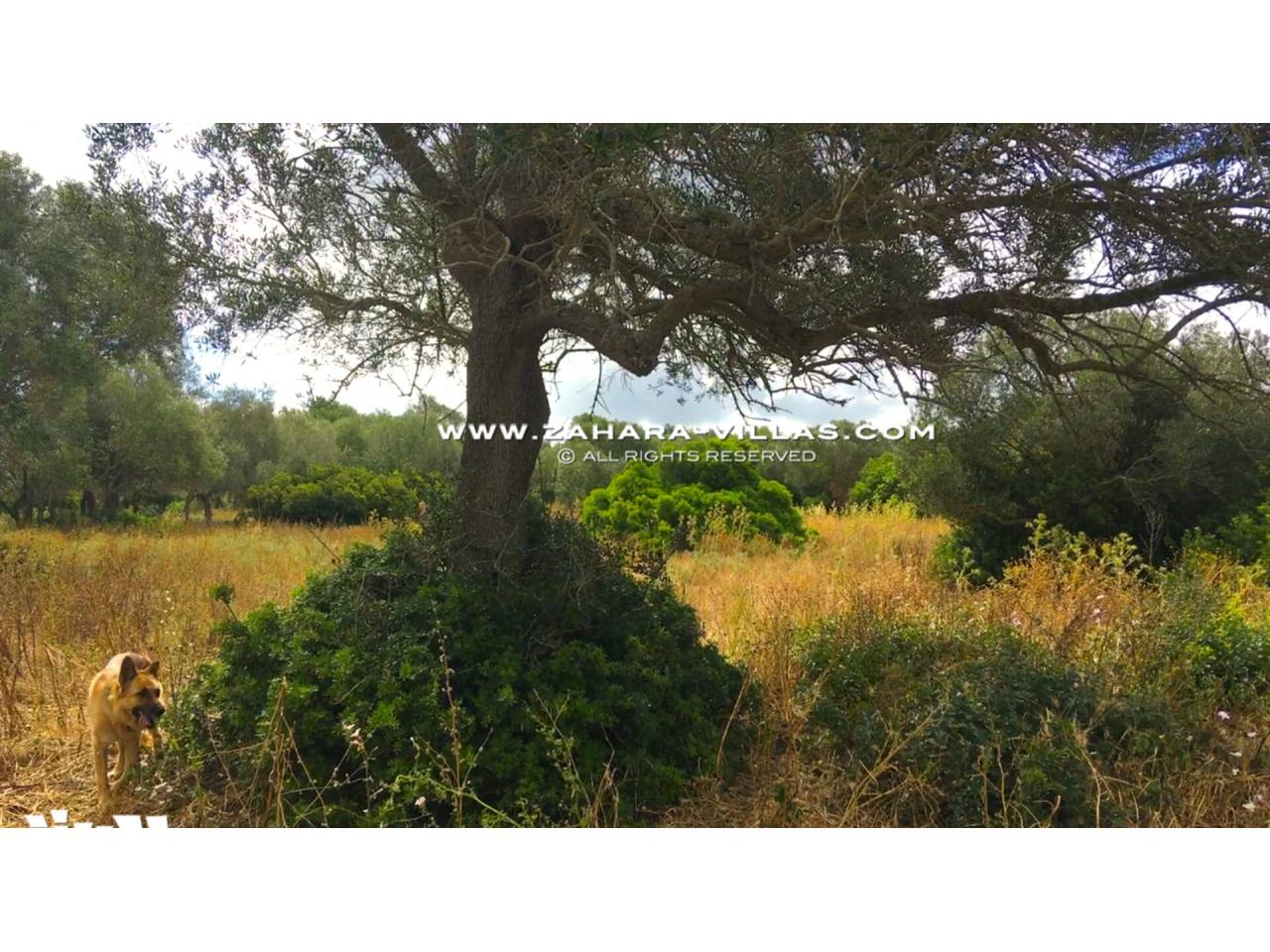 Imagen 16 de Country state for sale in Vejer de la Frontera